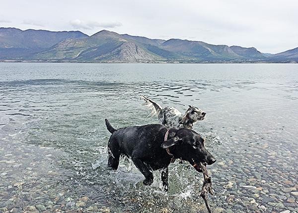 Dogs on Water Break