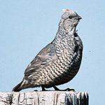 Oklahoma Bird Hunting, Pheasant and Quail | Ultimate Upland