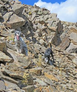 Bird Dogs in Rocks