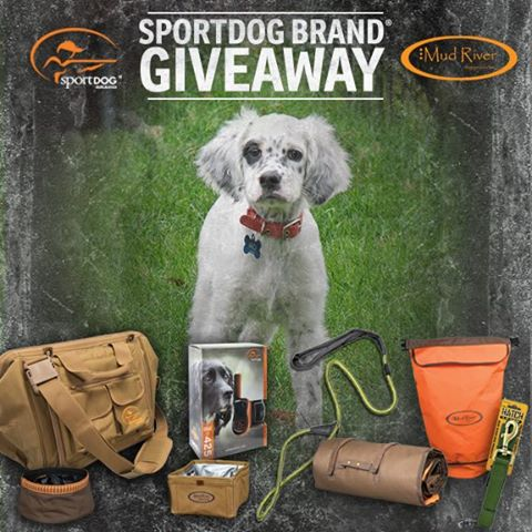 Puppy Rio Giveaway