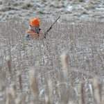 Hunting Cattails