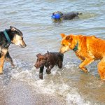 New Water Friends