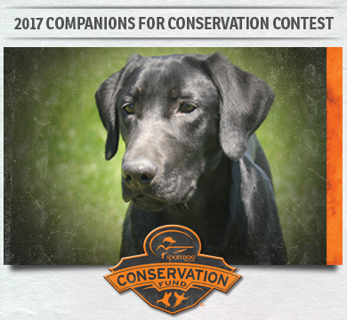 Companions for Conservation