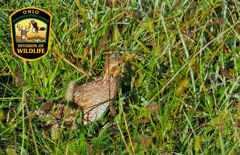 Ohio Division of Wildlife