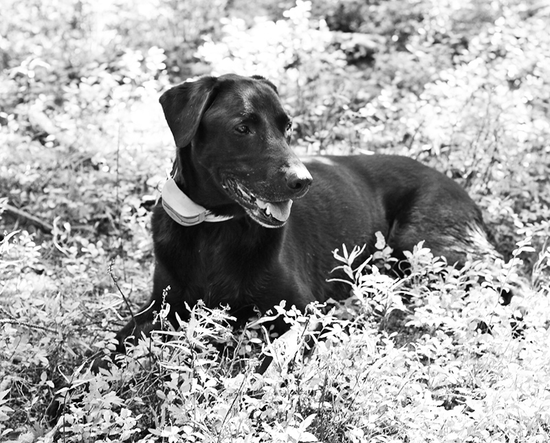 The Old Lab Wyatt