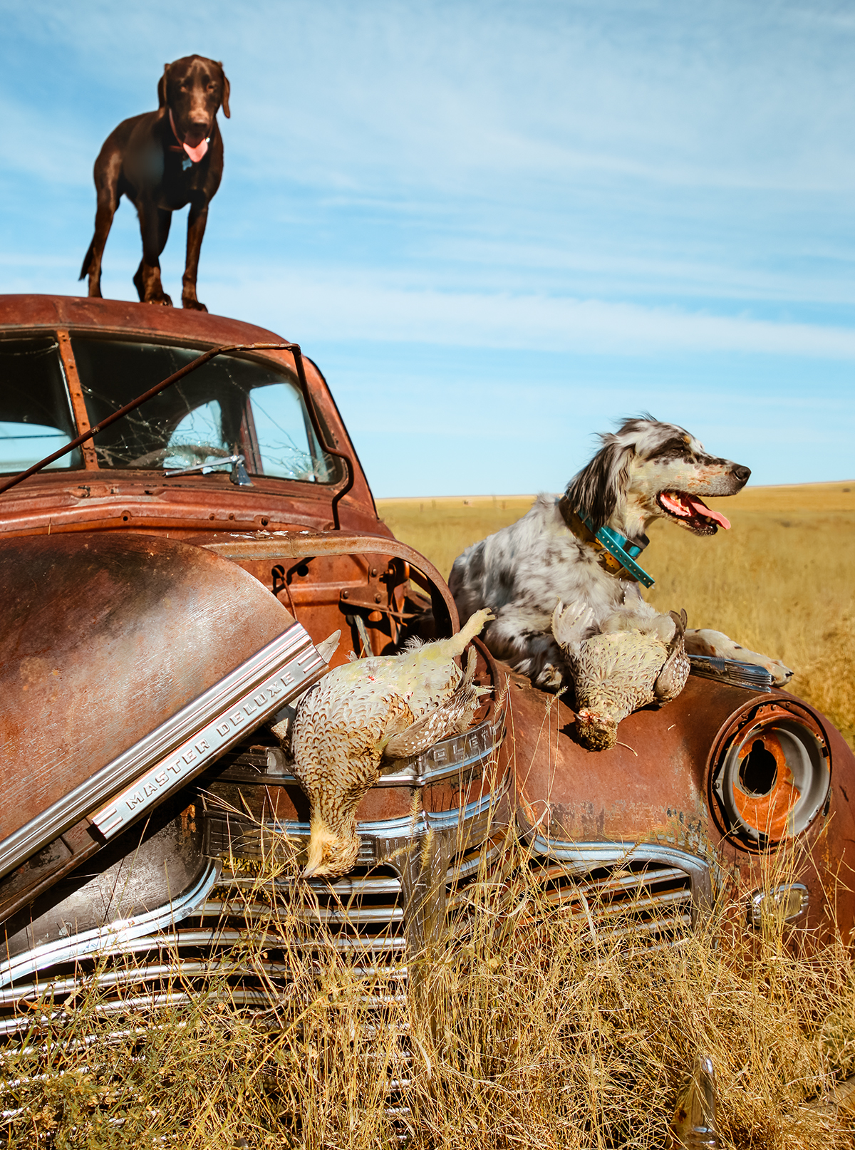 Old chevy and a couple dogs