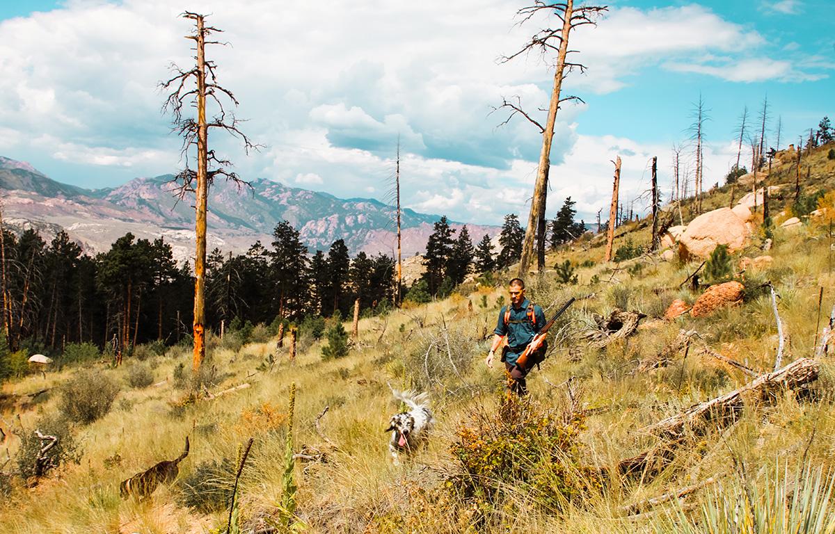 Bird Hunting Colorado